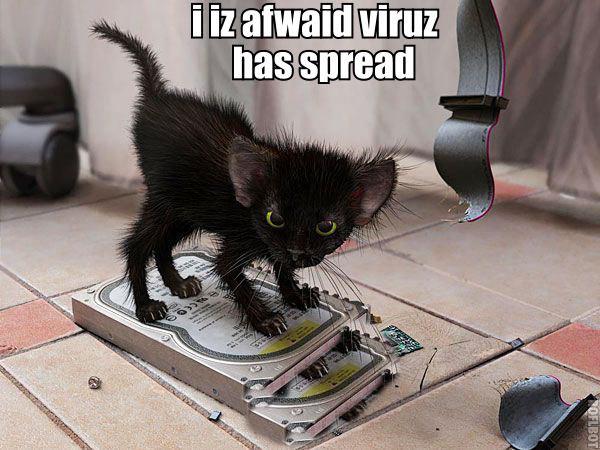 pc repair kitteh. pc repair kitteh.. evil kitteh looks evil pc repair kitteh
