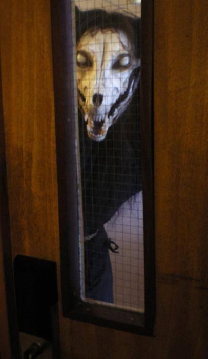Peek-A-Boo. . Dog skull