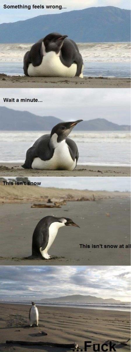 penguin. found on facebook. fuel: wrung... Walt a minute.... The Hangover III penguin found on facebook fuel: wrung Walt a minute The Hangover III