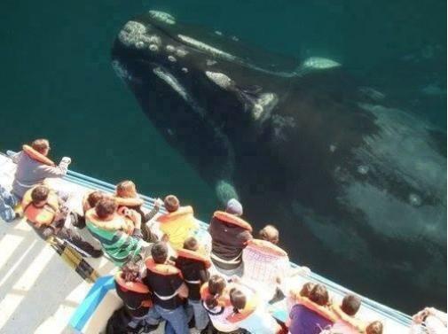 Perspective. If you like Batman check this: www.youtube.com/watch?v=temJ9FJ4gwA.. damn you old man whales