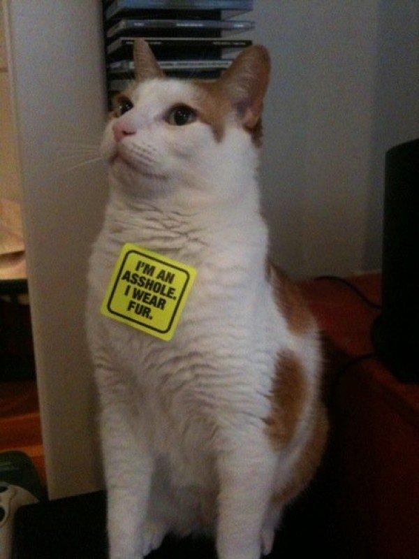 PETA Got at the Cat. PETA sucks.. PETA cat i am an asshole