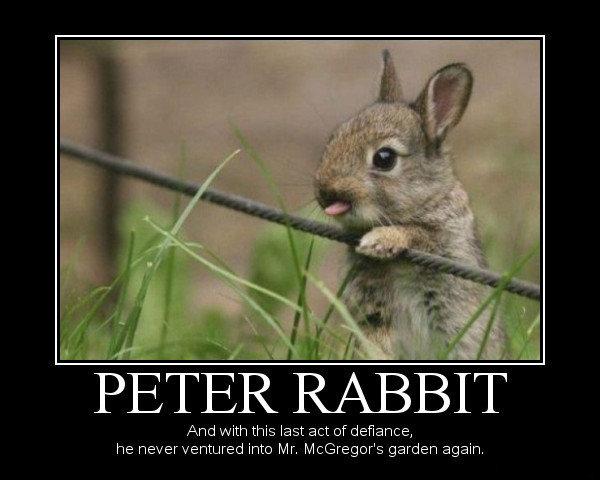 peter rabbit. . And with this last act of defiance, he never ventured int»: Mr, Mcgregor' s garden again. peter rabbit And with this last act of defiance he never ventured int»: Mr Mcgregor' s garden again