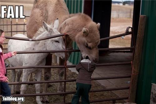Petting Zoo FAIL. Petting Zoo FAIL.. FOOD!! Petting Zoo FAIL