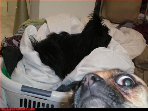 Photobomb dog. funy dog. photobomb