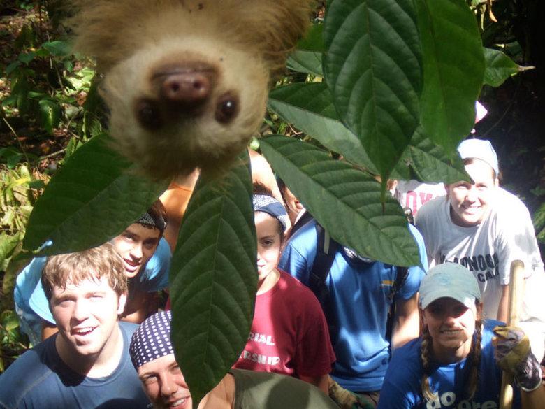 photobombing like a sloth. . photobombing like a sloth