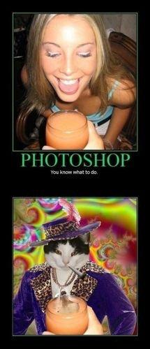 Photoshop skills level 9000. . Photoshop cat