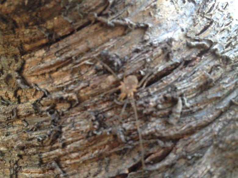 Pic by Andre herring.king of art. Photo taken by the king of art.hello.. king of art? i doubt it... Spiders art arti