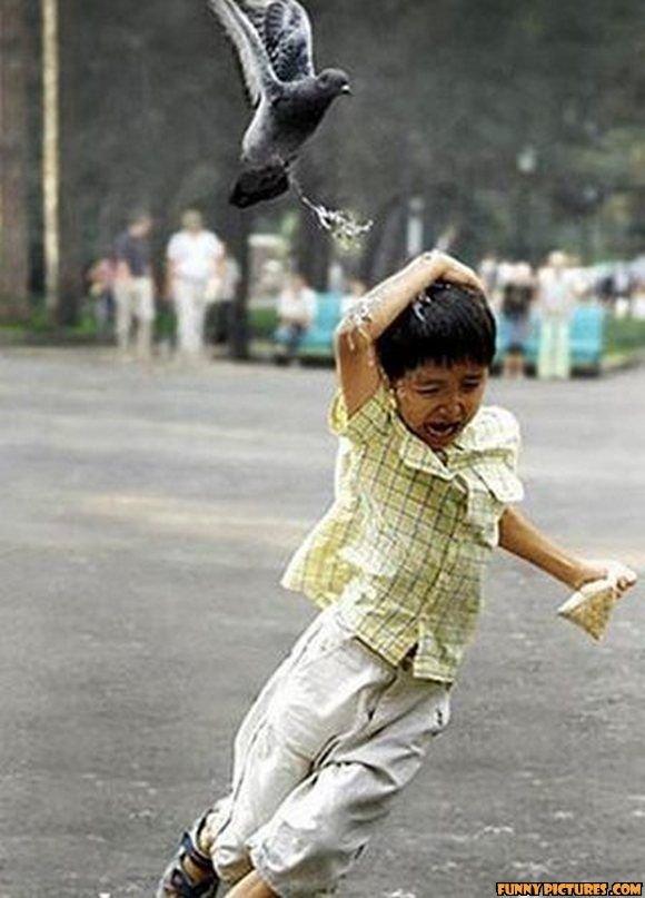 Pigeon Used Poop. ITS SUPER EFFECTIVE. poop bird poops lol