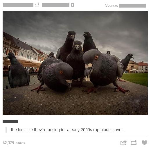 Pigeons. Pigeons. the ' far :3 Mi rap notes 'millai 5: ' pigeons