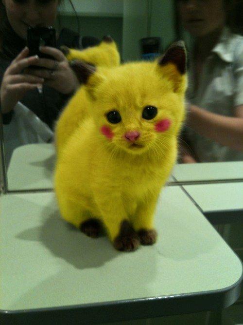 Pikachu :3. Pikachu is awesome.. it's really cute, But Wtf Poor little kitten. so cute, FLYINGMONGOOSE