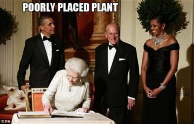 Plant. .. Poorly placed wife Plant Poorly placed wife
