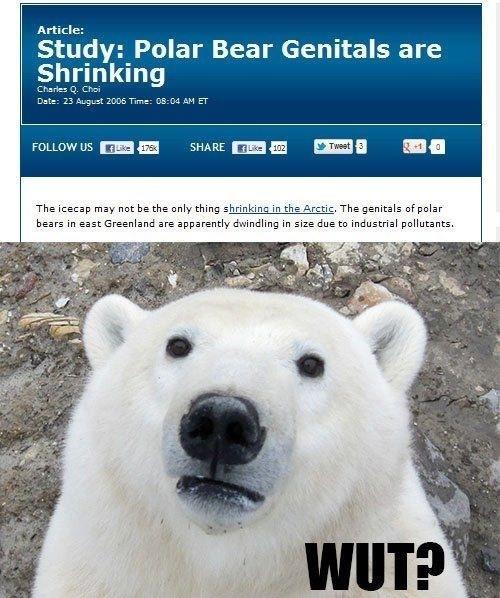 "Polar Bears Man.. Them Genitals.. Article: Study: Polar Bear Genitals are Shrinking Cranes D.. crs FOLLOW "" ""lla"" lla, SHARE mall"" ll, ""Ill"" H The may he the on Polar Bears Man Them Genitals Article: Study: Bear are Shrinking Cranes D crs FOLLOW "" ""lla"" lla SHARE mall"" ll ""Ill"" H The may he the on"