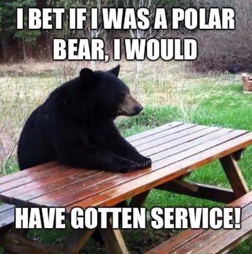 Poor bear. . if offi. racism is unbearable Poor bear if offi racism is unbearable