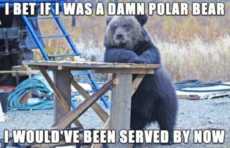 Poor bear. .. ProTip: Don't eat a polar bears liver, it has enough Vitamin A to kill the average adult Poor bear ProTip: Don't eat a polar bears liver it has enough Vitamin A to kill the average adult