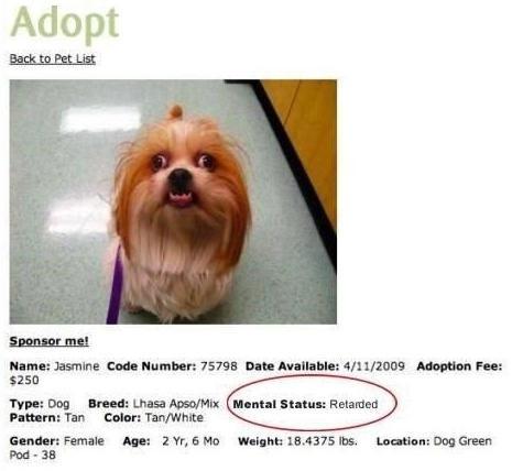 Poor Jasmine. . lama: Jasmine End: Number: 15195 Data in Adoption Fan: Tim Dog Hamill Intuit . Fathom: Tun calm: Ttm/ White poor jasmine is retarded