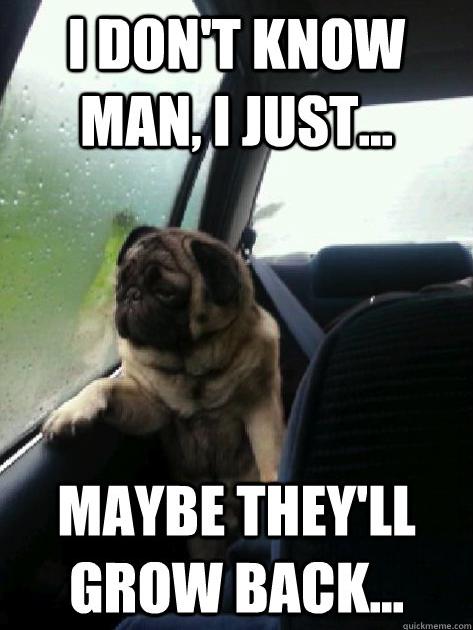Poor Pug... He didn't choose the pug life, the pug life chose him.. l ( lull l Ir MAYBE TIGEY' ll. Dat pun in the desc pug dog hi guys