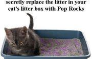 pop-rocks-prank. .. Replace your friend's poprocks with cat litter. pop-rocks-prank Replace your friend's poprocks with cat litter