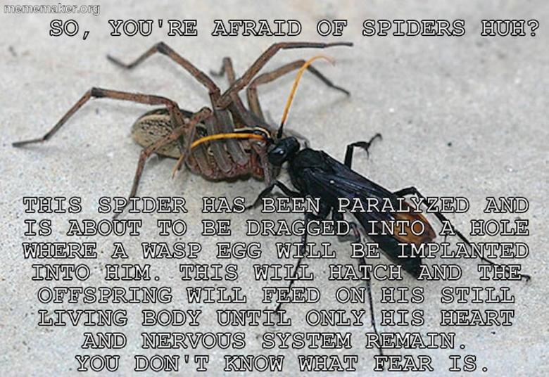 Pretty Interesting... . spider wasp cat oh my god