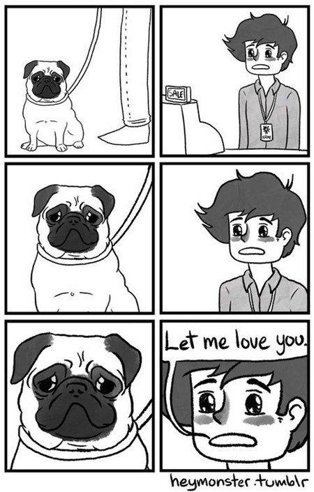 Pugs. . Pugs