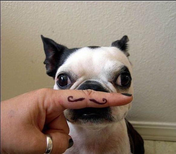 Puppy Mustache. .. Le derp Puppy Mustache Le derp