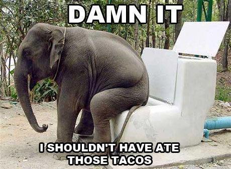 Tacos. . silly goofy Stupid dumb WTH