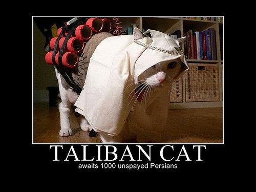 Taliban Cat. . CAT unspaced cat taliban allah