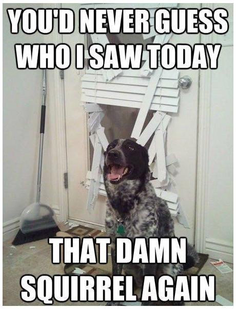 That Damn Squirrel. . I yht I Dog Door Squirrel