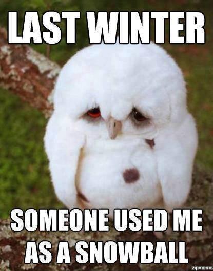 That feely feel. . zipmeme. I feel sorry for that owl. That feely feel zipmeme I sorry for that owl
