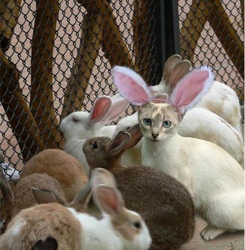 the undercover bunny. the undercover bunny. bunny funny cat funny bunny undercover bunny