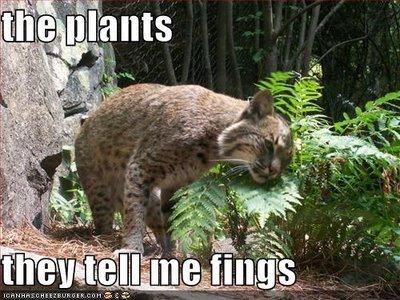 the plants tell secrets. they talk I swear!!.. Especially that Marijuana. plants cat