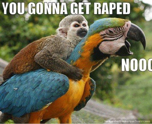 the monkey wapist. poor bird<br /> i loled at the bird eyes.. What the gay?! the monkey wapist poor bird<br /> i loled at bird eyes What gay?!