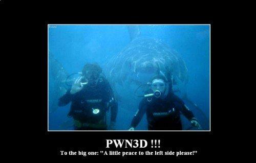 The Definition of PWNED. shark pwnes people.. photobomb. shark pwned
