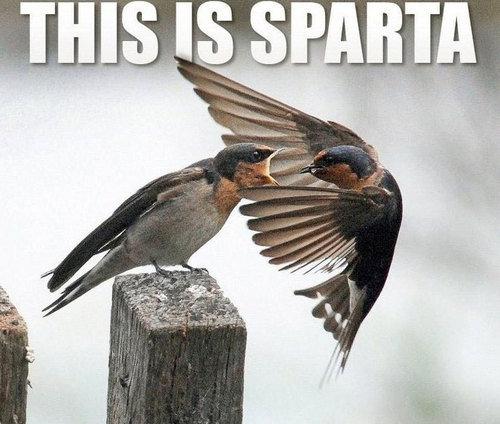 THIS IS SPARTAAAAA!!!!11!1!. . THIS IS SPARTAAAAA!!!!11!1!