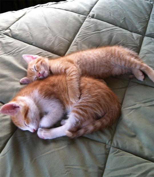 Tiny Kitty Is The Big Spoon. Tiny Kitty Is The Big Spoon isfunny.net/im-sorry-bro/. funny
