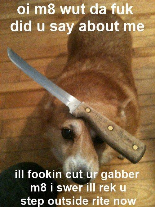 title. As seen on: www.facebook.com/BossURLIsBoss. ill fookin but i' ': gabber. gotta go fast!!!!!!! tags
