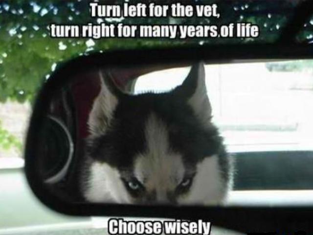 title. desc... hfw no vet trip <----- title desc hfw no vet trip <-----