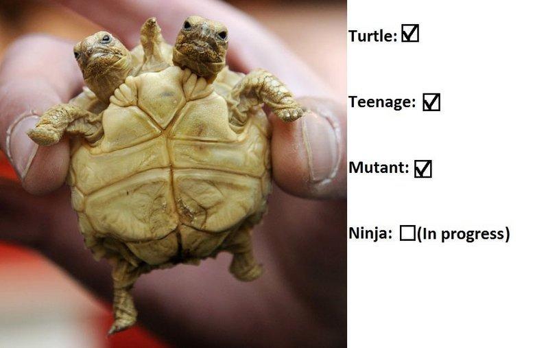 TM(N)T. . Turtle: M Teenage: n Ninja: progress). Fixed TM(N)T Turtle: M Teenage: n Ninja: progress) Fixed