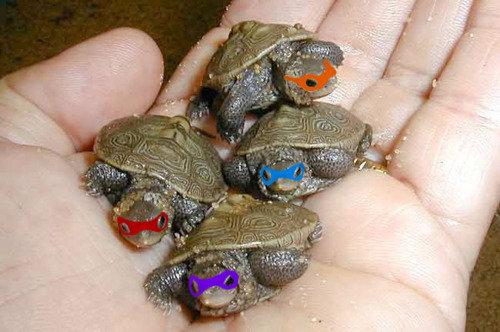 TMNT. . weeeo fuck tags turtles mutants blarrrgh