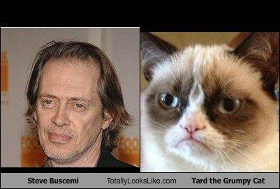 Totally Looks Like. crazy eyes.... Tar! than Eh! cat grumpy cat steve buscemi looks like tard lol