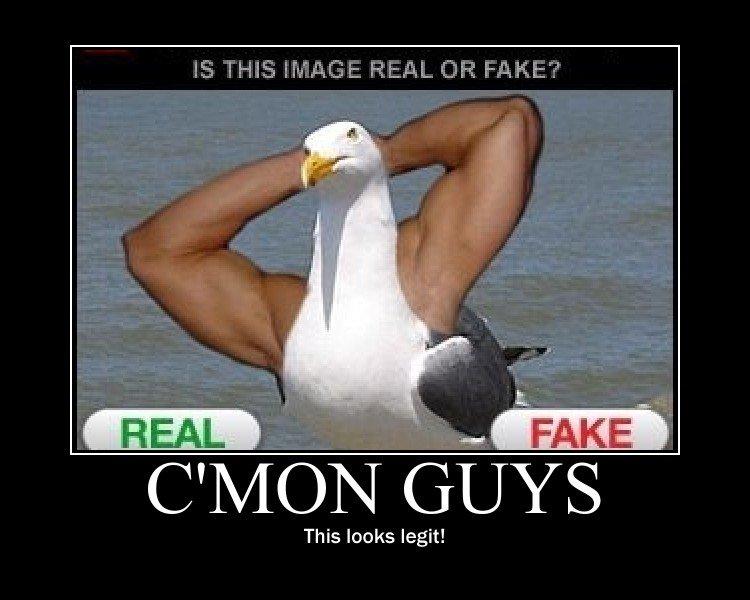 Totally Legit. . Cyqv/ Ci- This looks legit!. It's fake! real seagulls have shorter necks! totally legit game