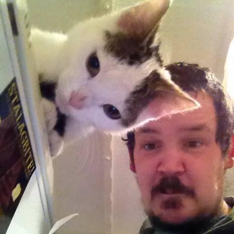 Transparent Cat. . Animals pets Cats tags