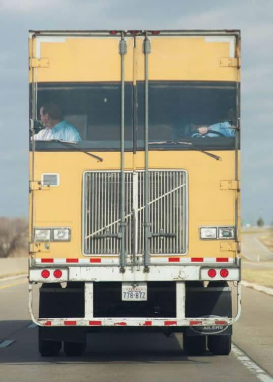 trucker troll. .. Took me way to long to figure out trucker troll Took me way to long figure out