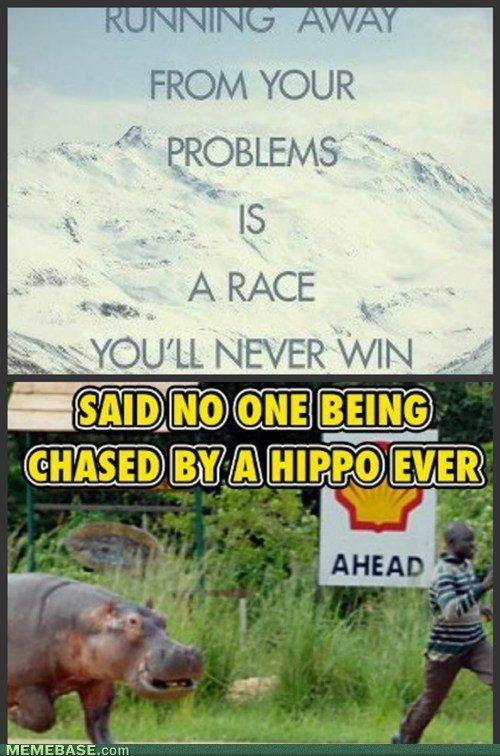True.... Not mine, found on Memebase.. hippos, second most dangerous animal in Africa. RUN bitch