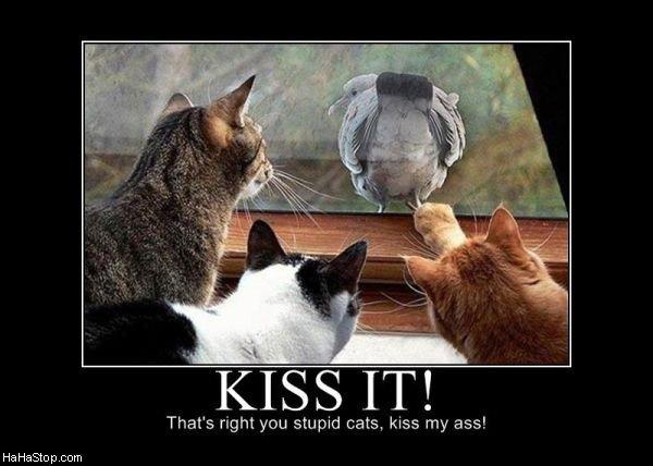 Turkeys ass. Come on.. Kiss it.. thats not a turkey retard its a pigeon... turkeys ass cats