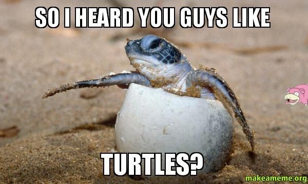 Turtle time. . iru. i. crag. I do. turtles