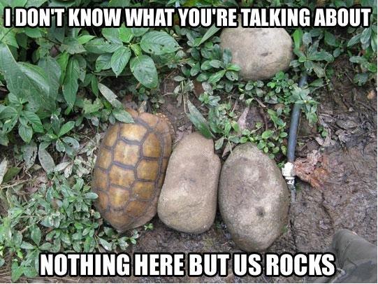 Turtle. . Itf' MT I ill HERE MT Us BUCKS. Don't mess with them turtles Turtle Itf' MT I ill HERE Us BUCKS Don't mess with them turtles