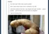 penis potato