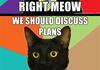 Business Cat Comp