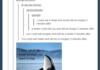 Whale Jokes